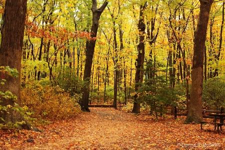 Autumn forest on a rainy day