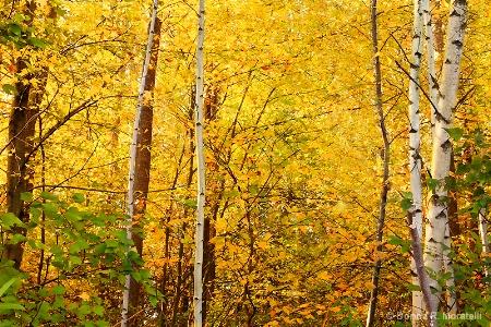 Golden hues of Autumn