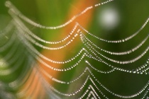 Webs In Abstract ...
