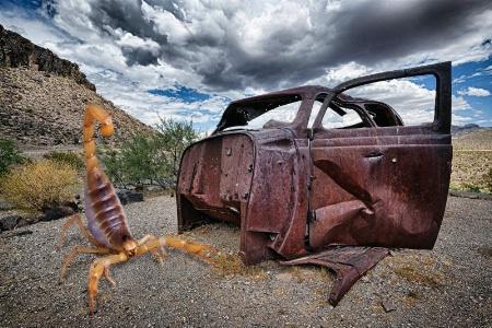 Junk Yard Scorpion