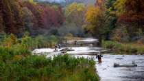 Fishing Beavers B...