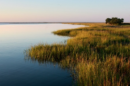 Grassy Shoreline