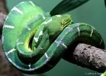 """Emerald Gree..."