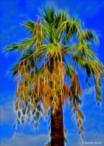 Cascading Palm