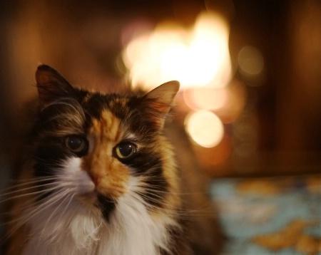 Fireside Cat