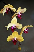 """Orchid #1&#3..."