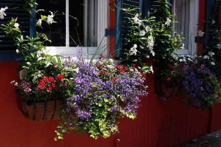 Window Box Beauty