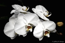 """Orchid #4&#3..."