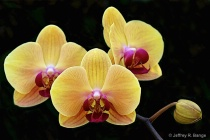 """Orchid #6&#3..."