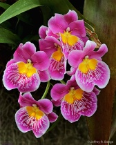 """Orchid #7&#3..."