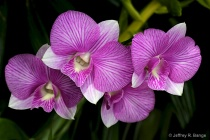 """Orchid #8&#3..."