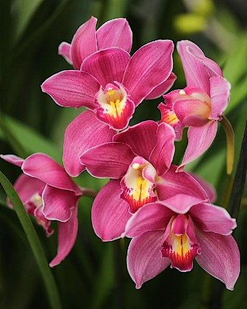 """""""Orchid #10"""""""