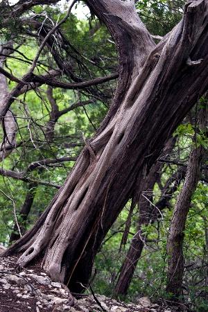Cedar on Incline