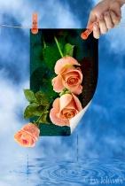 Flower Drying