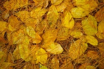 Fall N Mix