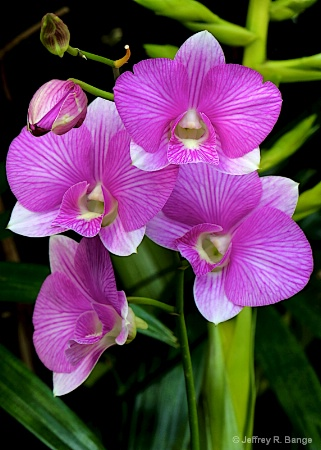 """""""Orchid #14"""""""