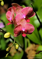 """""""Orchid #15&#..."""