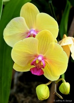 """""""Orchid #16&#..."""
