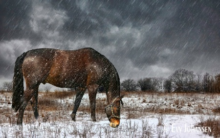 Grazing in Snow Storm