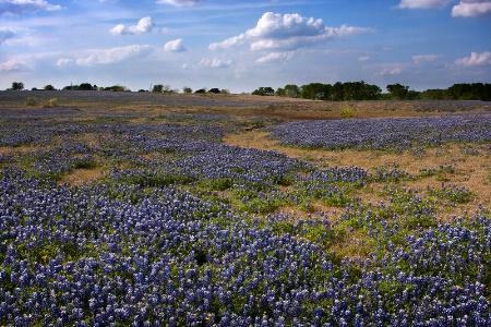Pasture In Blue