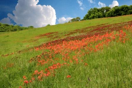 Our Beautiful Oklahoma Spring