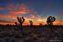 Mojave Sunset II