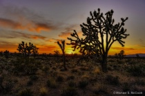 Mojave Sunset Rew...