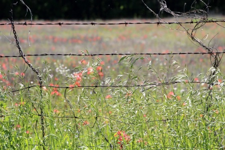 Wildflowers And Barbed Wire