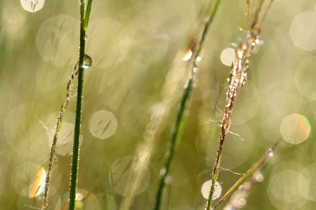 Close Up On Grasses