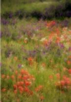 Dreams Of Monet