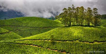 Green Hills of Munnar