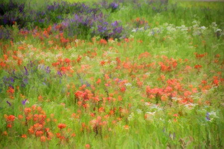 A Garden Of Wildflowers