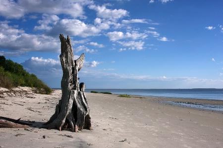 Sand Sentinel