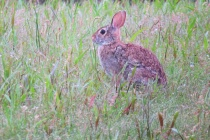 Bunny In The Gras...