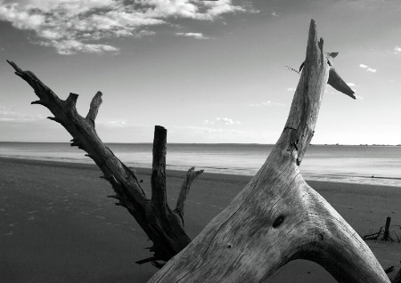 Beach Creature