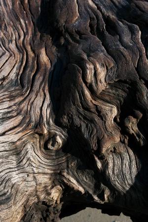 Eye of the Driftwood