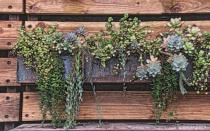 Plant Arrangement...