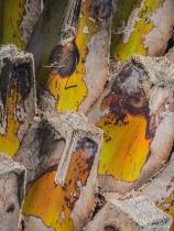 Pruned Palm Tree ...