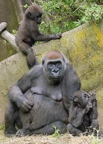 """Babysitter&#..."