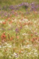 Monet Memories