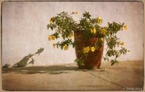 Shadows and Pot o...