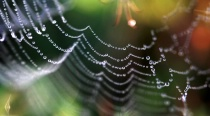 Web With Spider L...