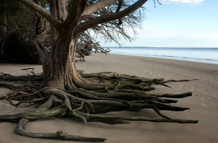 Crawling to the Sea on Tentacles of Wood