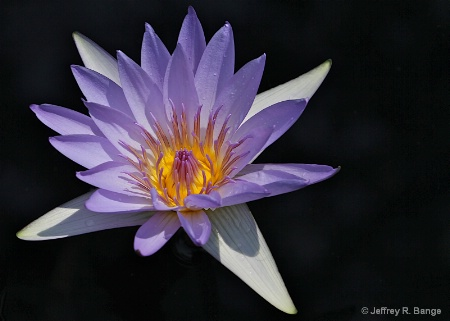 """Waterlily #4"""