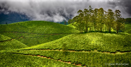 Green Hills of Munnar