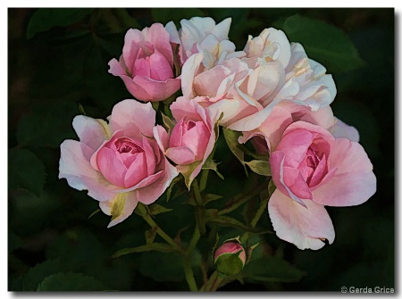 Mini Pink and White Roses