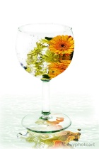 A Glass of Summer