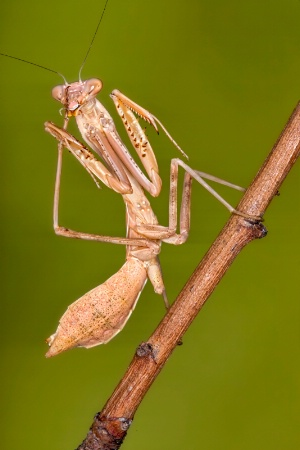 Mantid Cleaning