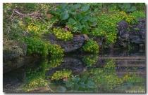 Plants, Rocks and...