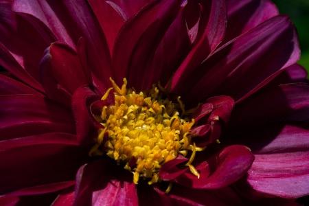 Yellow in Crimson